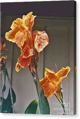 Calla Lily Canvas Print by Fred Jinkins