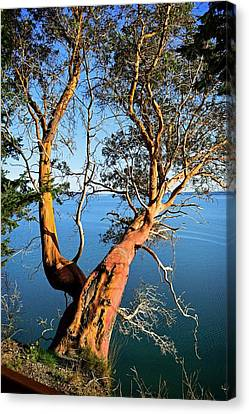 Camano Island State Park Canvas Print by Maralei Keith Nelson