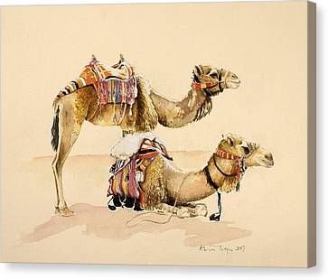 Camels From Petra Canvas Print by Alison Cooper