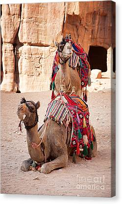 Camels In Petra Canvas Print by Jane Rix