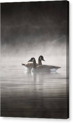 Canada Geese In The Fog Canvas Print by Bill Wakeley