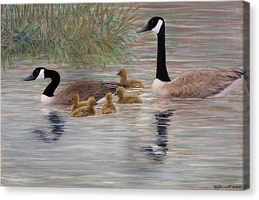Canada Goose Family Canvas Print by Kathleen McDermott