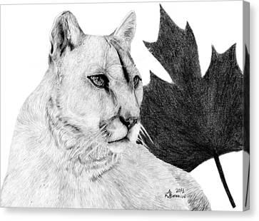 Canadian Cougar Canvas Print by Kayleigh Semeniuk