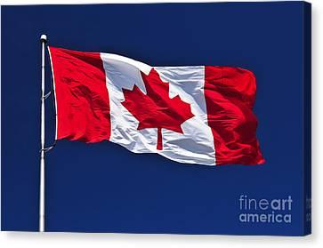 Canadian Flag Canvas Print by Elena Elisseeva