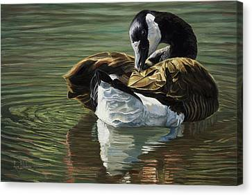 Canadian Goose Canvas Print by Lucie Bilodeau