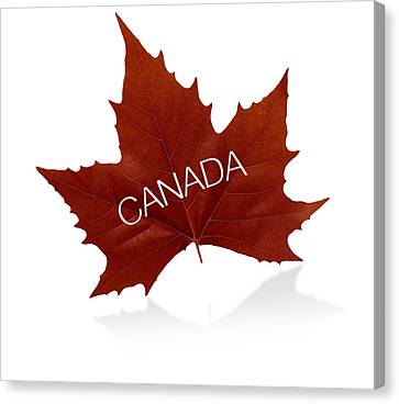 Canadian Maple Leaf Canvas Print by Aged Pixel