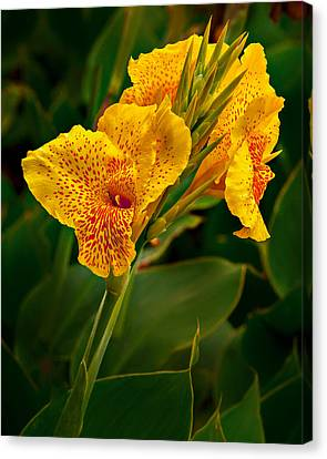 Canna Blossom Canvas Print by Mary Jo Allen