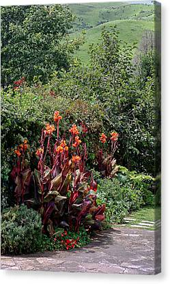 Canna Flowers On Pathway Canvas Print by Linda Phelps