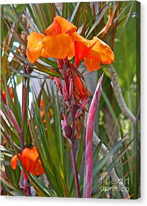 Canna Lily With New Growth Canvas Print by Kenny Bosak