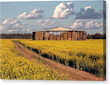 Canola And Hay Canvas Print by Helen Akerstrom Photography