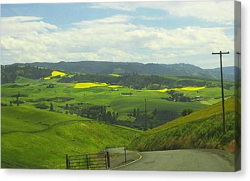 Canola Country Road Canvas Print by Anne Mott