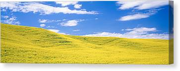 Canola Fields, Washington State, Usa Canvas Print by Panoramic Images