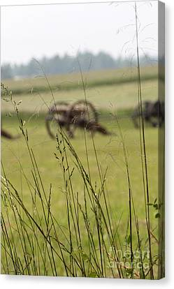 Canon In The Weeds Canvas Print by Dwight Cook