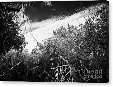 Canopy Of The Mangrove Forest In The Florida Everglades Usa Canvas Print by Joe Fox