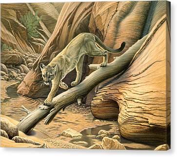 Canyon Hunter -  Cougar Canvas Print by Paul Krapf