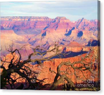 Canyon Shadows Canvas Print by Janice Sakry