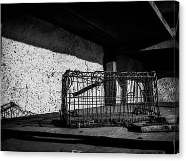 Captivity Defied Liberty Attained Canvas Print by Kaleidoscopik Photography