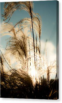 Capturing Golden Light Canvas Print by Mela Luna