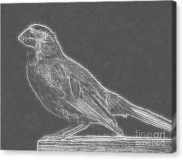 Cardinal Bird Glowing Charcoal Sketch Canvas Print by Celestial Images