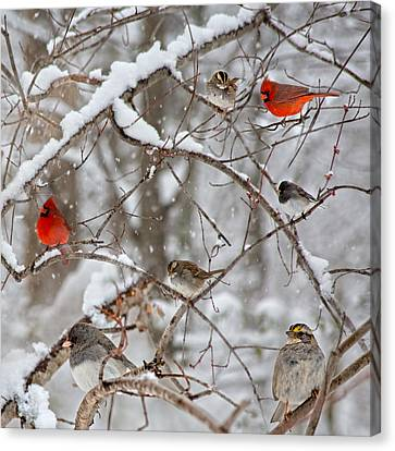 Cardinal Meeting In The Snow Canvas Print by Betsy C Knapp