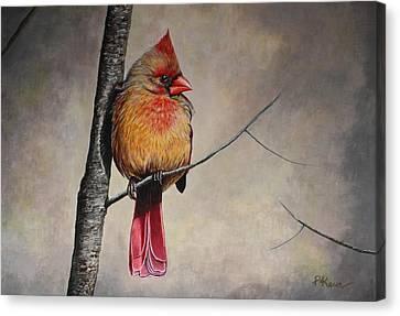 Cardinal Canvas Print by Pam Kaur
