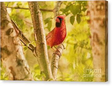 Cardinal Rules Canvas Print by Lois Bryan