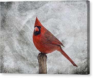 Cardinal Watching Canvas Print by Sandy Keeton