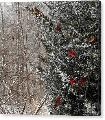 Cardinals In Winter 1 Square Canvas Print by Karen Adams