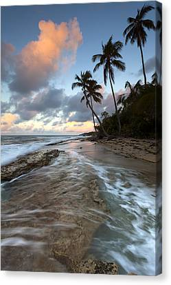 Caribbean Flow  Canvas Print by Patrick Downey