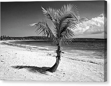 Caribbean, Puerto Rico, Vieques Canvas Print by Jaynes Gallery