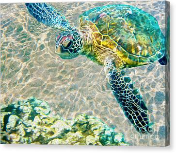 Beautiful Sea Turtle Canvas Print by Jon Neidert