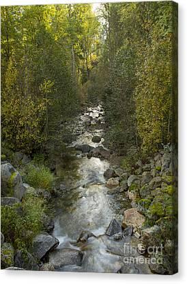 Caribou Creek Canvas Print by Idaho Scenic Images Linda Lantzy