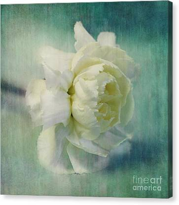Carnation Canvas Print by Priska Wettstein