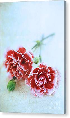 Carnations Canvas Print by Stephanie Frey