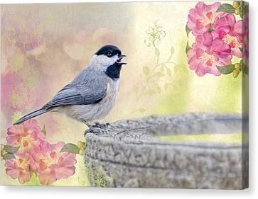 Carolina Chickadee In Camellia Garden Canvas Print by Bonnie Barry