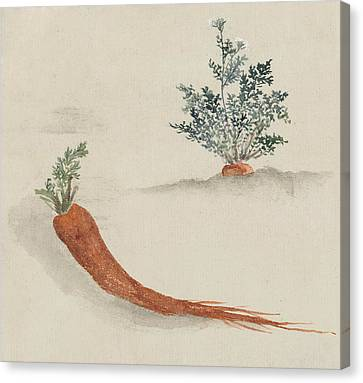 Carrots Canvas Print by Aged Pixel