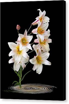 Cascade Of Lilies On Black Canvas Print by Gill Billington