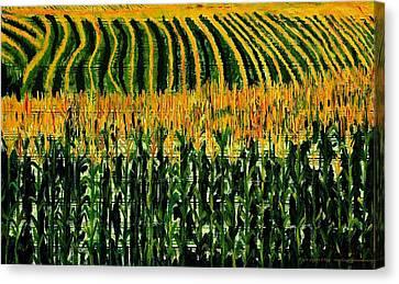Cash Crop Corn Canvas Print by Gregory Allen Page