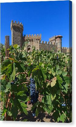Ripe On The Vine Castelle Di Amorosa Canvas Print by Scott Campbell