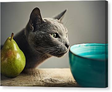 Cat And Pears Canvas Print by Nailia Schwarz
