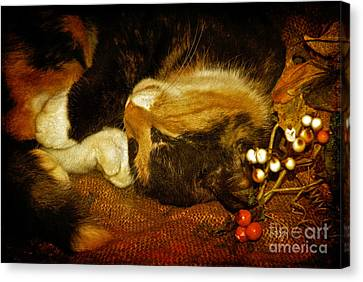 Cat Catnapping Canvas Print by Lois Bryan