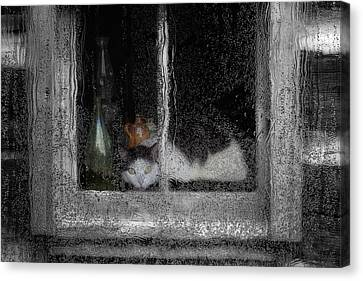Cat In The Window Canvas Print by Jack Zulli