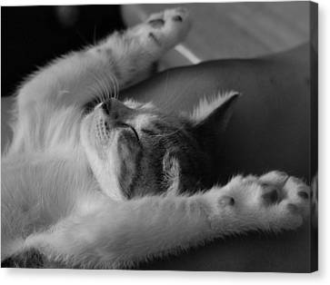 Cat Nap Bw Canvas Print by Elizabeth Sullivan