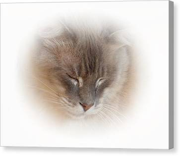 Cat Nap Canvas Print by Connie Handscomb