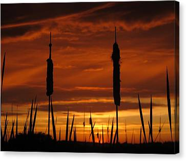 Cat Nine Tails Sunset Canvas Print by Donnie Freeman