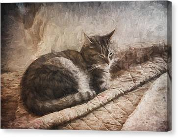 Cat On The Bed Painterly Canvas Print by Carol Leigh