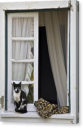 Cat Sitting On The Ledge Of An Open Wood Window Canvas Print by David Letts