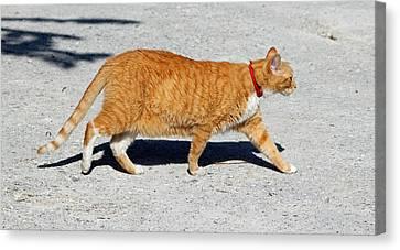 Cat Walk Canvas Print by Cynthia Guinn