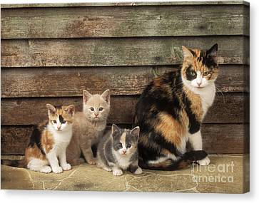 Cat With Kittens Canvas Print by John Daniels
