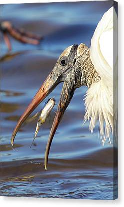 Catch Of The Day Canvas Print by Bruce J Robinson